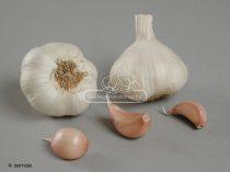 Flavor 40 őszi-tavaszi UT fokhagyma vetőmag - átmérő: 40 mm+