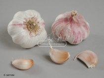 SPRINT 45mm+ szuperkorai őszi UT fokhagyma vetőmag - átmérő: 45 mm+