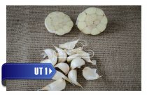 THERMIDROME 40mm+ őszi UT1 fokhagyma vetőmag - átmérő: 40 mm+