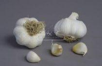 THERMIDROME 50mm+ őszi UT1 fokhagyma vetőmag - átmérő: 50 mm+